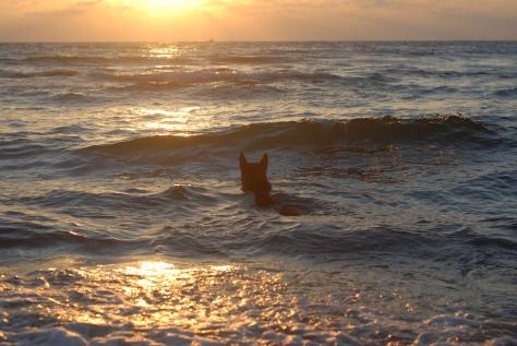 Mi perro trabajando con su miedo marítimo...